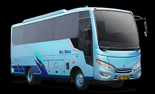 Big-Bird-Bravo-Bus
